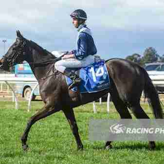 , Home, Thoroughbred Horses for Sale and Online Bidding   By A Trojan Bloodstock