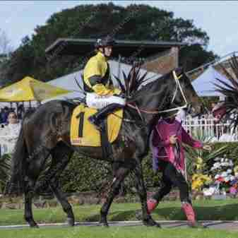 , Home, Thoroughbred Horses for Sale and Online Bidding | By A Trojan Bloodstock